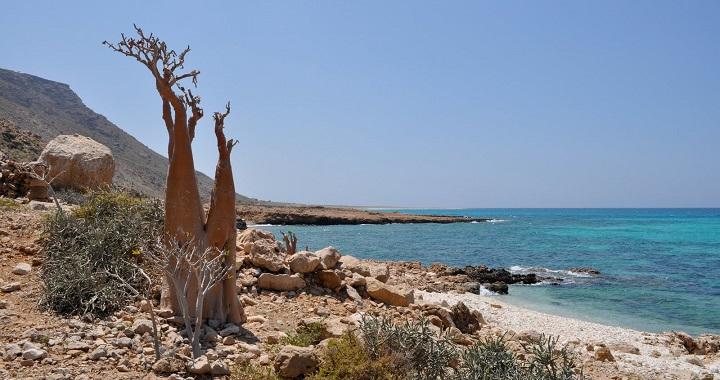 Isla de Socotra1