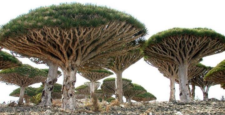Isla de Socotra8