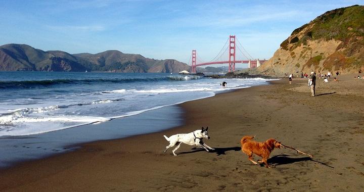 playas para perros1