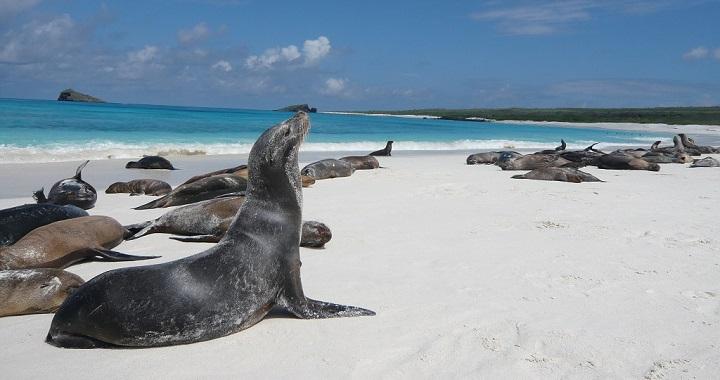 Bahia Gardner Islas Galapagos