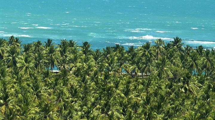 Praia do Gunga Brasil1