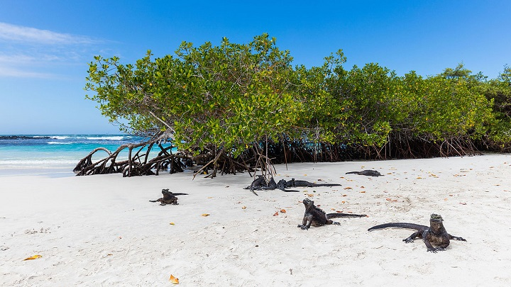 Tortuga-Bay