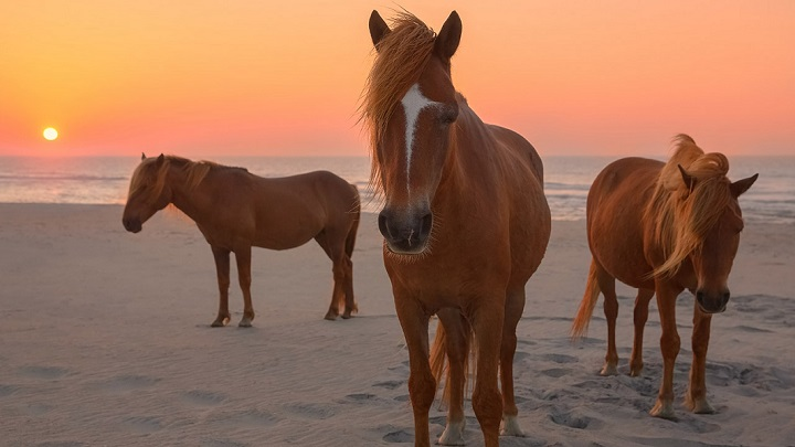 Assateague-foto