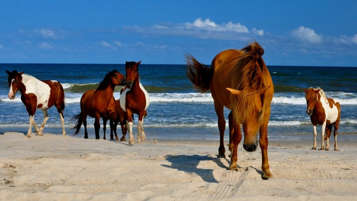 Assateague-foto1