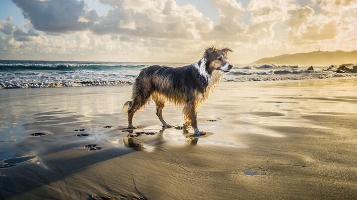 perro-en-la-orilla