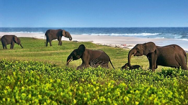elefantes-en-Loango-Beach